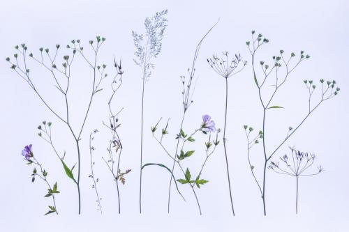 Jenkins, Val_The Meadow_1